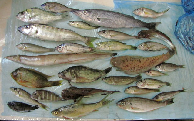 Fish pix global great lakes for Lake tanganyika fish
